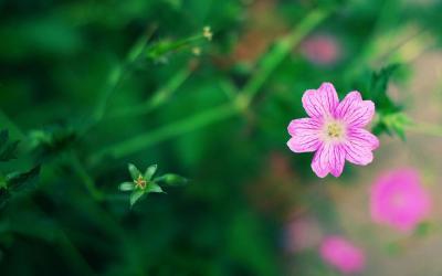 植物是人类的好朋友 你的盆栽植物也能检测有害气体
