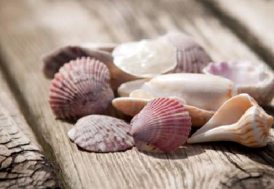 """贝壳里为什么会传出海洋的声音?""""贝壳共振""""了解一下"""