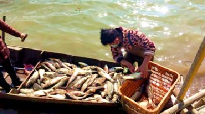 鲜鱼送前线,助力抗疫情