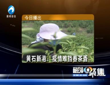 黄石新港:疫情难挡春茶香