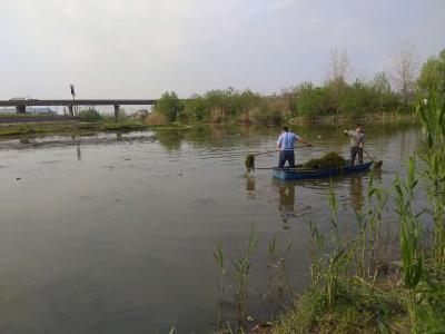 新闸港生态环境整治守护绿水青山