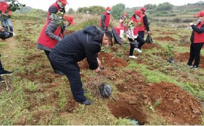 开展义务植树建设乡镇生态环境