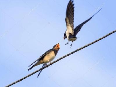 鸟儿搬新家 线路保安全