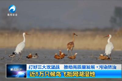 近8万只候鸟飞抵网湖湿地