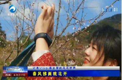 记者Vlog:春风拂面桃花开