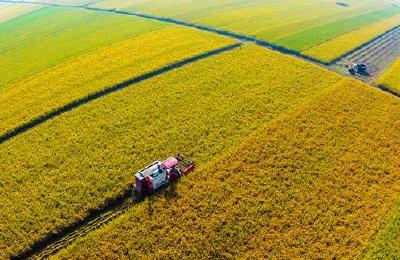 湖北省首次发布水稻油菜甘蓝全程机械化生产模式