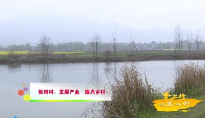 枫树村:发展产业  振兴乡村