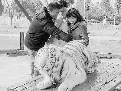 参观野生动物园,这些事情做不得!
