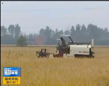 视频|龙感湖:农业机械化助力秋收