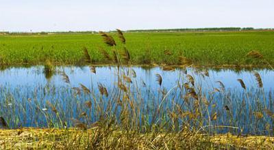 省移民局到浠水县检查策湖湿地生态保护与恢复项目实施情况
