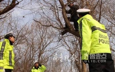 男子酒后驾驶遇交警 为躲处罚爬上十几米高大树