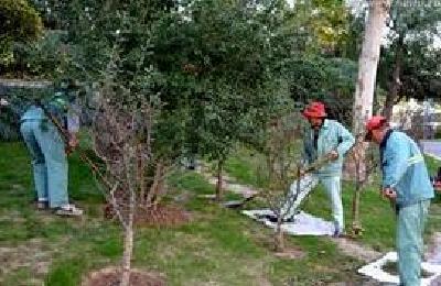 黄梅:春节假期园林工人坚守岗位清垃圾