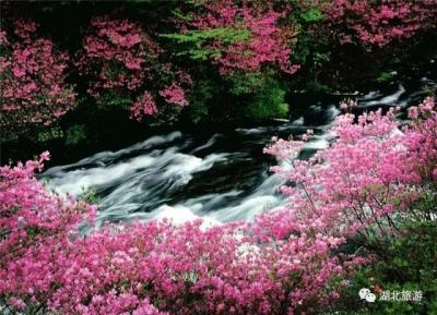 """湖北各地""""最美春天"""",你会爱上哪个?"""