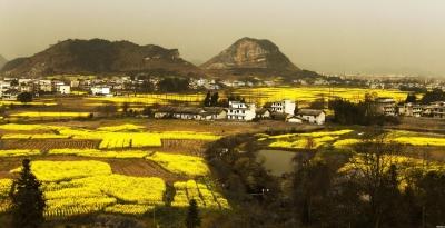 英山:10万亩油菜收割开启机械化之路
