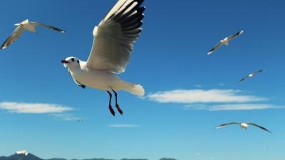 游客手抓红嘴鸥拍照遭罚 各国怎么保护野生动物?