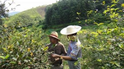 麻城:油茶专家为种植户传经送宝