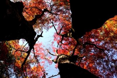 和烟飘落九色秋 纵情写意桃花溪