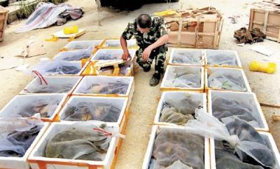货车内竟藏126头野生保护动物 来历不明已被查处