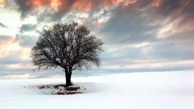 晚来天欲雪,能饮一杯无?十首雪诗词,读懂最美冬天