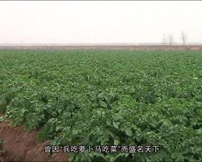 舌尖上的黄冈——黄州萝卜