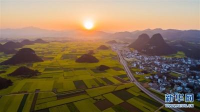 大地春歌:云南罗平百万亩油菜花绽放