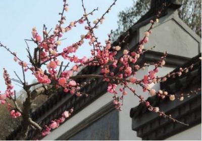 """樱花桃花梅花兰花……3月,湖北的名字叫""""花海""""!"""