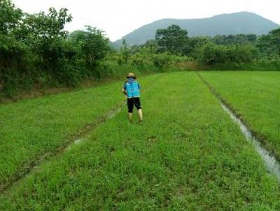 武穴 :加强农技指导 助农增产增收