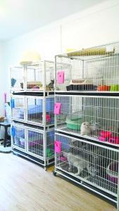 宠物猫寄养中心开在居民楼引异议 居民:扰民盼迁走