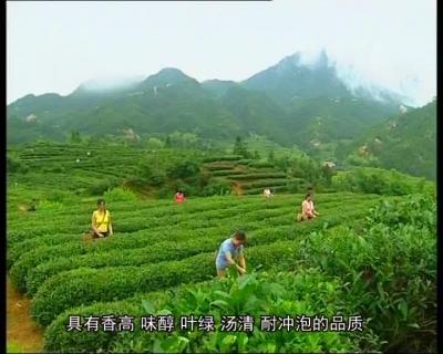 舌尖上的黄冈——茶叶