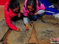湖北发现2.47亿年前湖北鳄类化石