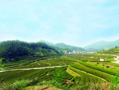 刘雪荣到英山就领衔督办的政协重点提案进行调研督办
