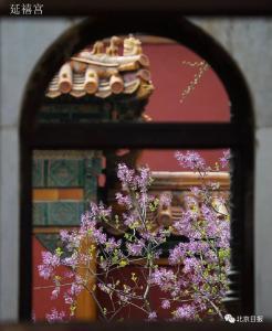 一开花,故宫就美成了御花园!来,一起进宫赏花!