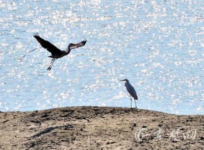 汉江湿地 鸟类家园