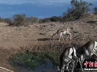 野生动物成饮水点常客