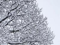 雪落山西芦芽山悬空村