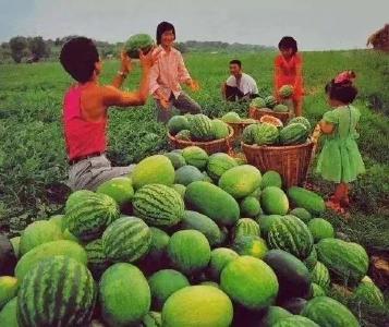"""""""中国成最大西瓜生产消费国""""上热搜,雨女有瓜?"""