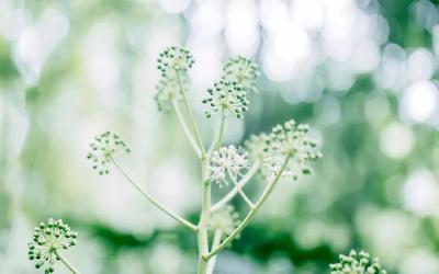 心里有花开,人生春常在