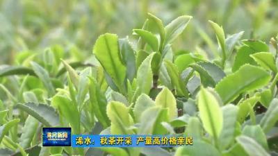 浠水:秋茶开采 产量高价格亲民