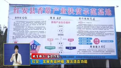 """《脱贫路上 奋力作为》 红安:发展香菇产业 激活""""造血""""功能"""