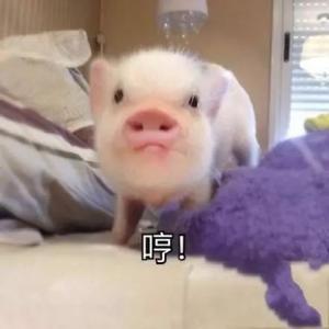 对不起,我要去养猪了!千亿