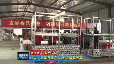 红安:发展香菇产业  助农增收致富