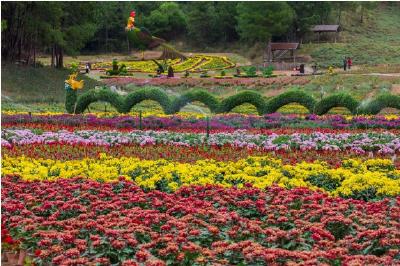 每日一读丨麻城赏菊