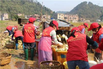 【百色-黄冈一家亲】暖心!广西百色高农公司为黄冈市捐赠20吨萝卜