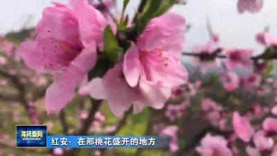红安:在那桃花盛开的地方