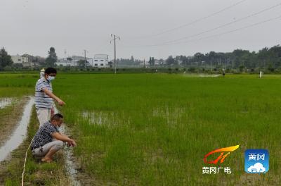 团风县农业农村局开展科技救灾
