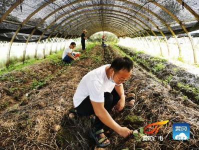 湖北黄冈:用科技的力量做强做大食用菌产业