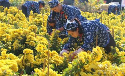 """云上""""一节一会""""(1)麻城:培育地标优品种子企业,助力乡村振兴"""