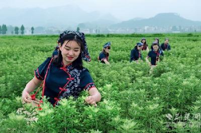 """云上""""一节一会""""(4)蕲春:新增11家工业企业 推出康养旅游线路"""