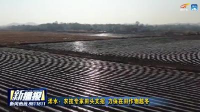 浠水:农技专家田头支招 力保在田作物越冬