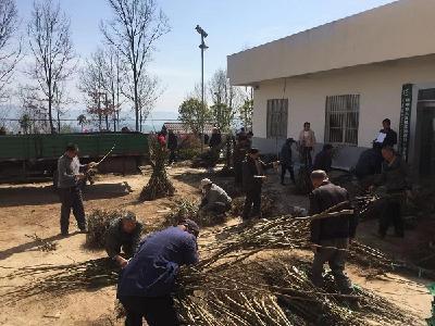 省社科联打响脱贫攻坚战 苏家寨村再掀核桃种植新高潮